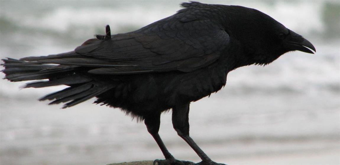 Quand une personne meurt, un corbeau transporte son âme au pays des morts. Mais parfois, il arrive des choses si terribles qu'une immense tristesse part avec elle et l'âme ne peut trouver le repos. Et parfois, parfois seulement, le corbeau peut ramener l'âme pour arranger les choses..... Thecrow Crow Corbeau Legende Legends Legend
