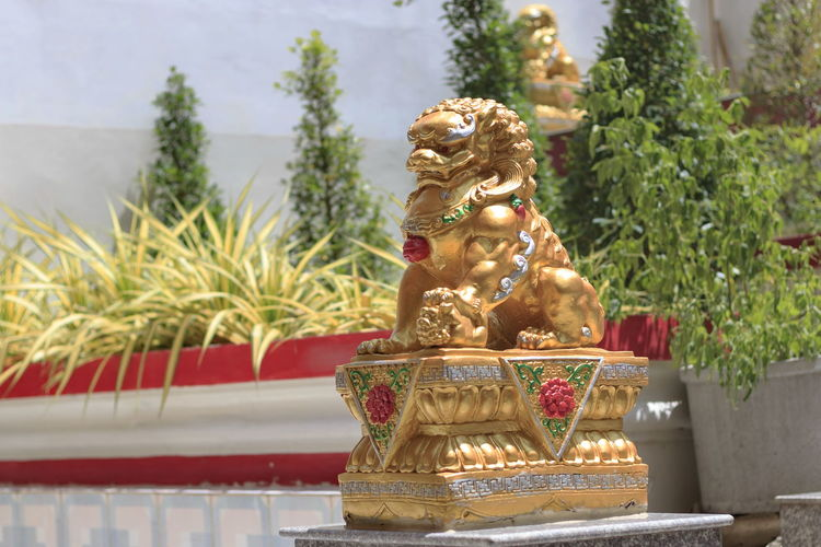 Lion statue set in the temple. Animal Statue Posing Lion Statue, Stone Lion, Architecture Art And Craft Belief Carving, Craft Creativity Culture Day Figurine  Focus On Foreground Gold Colored Human Representation Lion Statue Male Likeness Nature No People Plant Religion Representation Sculpture Spirituality Statue