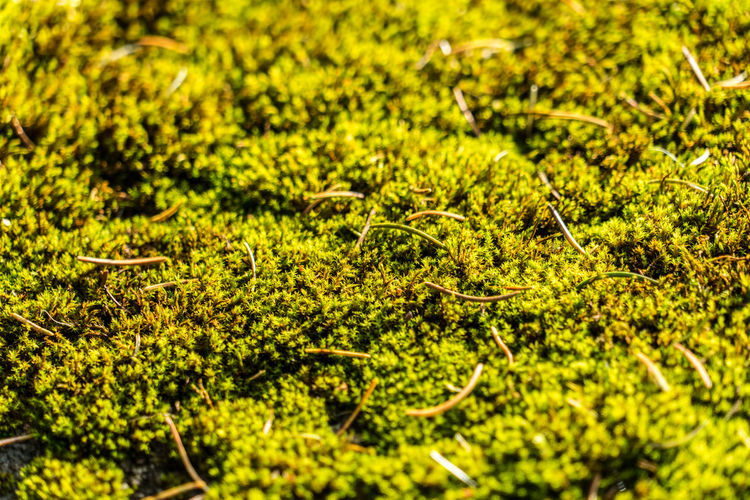Plant Growth Green Color Nature Full Frame Selective Focus No People Beauty In Nature Day Land Field Plant Part Leaf Close-up Tranquility Backgrounds Outdoors Green Lush Foliage Foliage Leaves