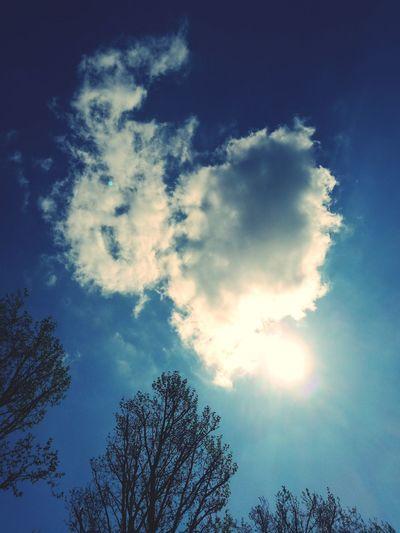 Sky Sky Blue Cloud - Sky Day Sun Tree And Sky