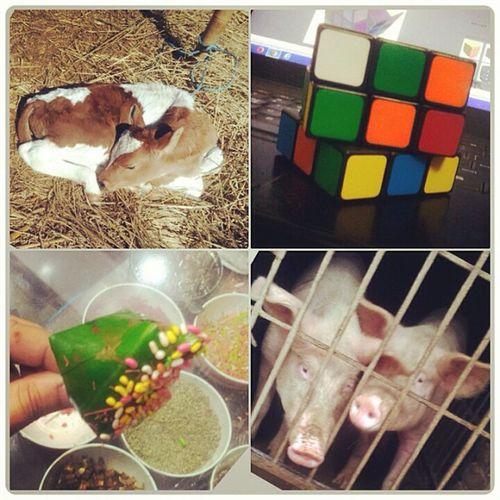 RandomShots Hashtagsnotworking Helpcentre Instagramerror frustating??? _../'―||||||||―――― ] ==o_____________| . .),―.(_(__)/ . //(\)),――' //___// ???