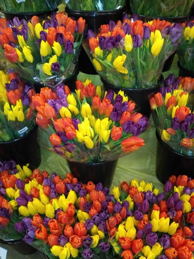 Flower Fragility Freshness Petal Plant Multi Colored Yellow Tulip Flower Head Close-up No People Day Bouquet Flower Market Red Purple Boquet Of Flowers Flower Collection Flowers Retail Display Backgrounds Spring 2017 Colorful Color Palette Color Explosion EyeEm Selects