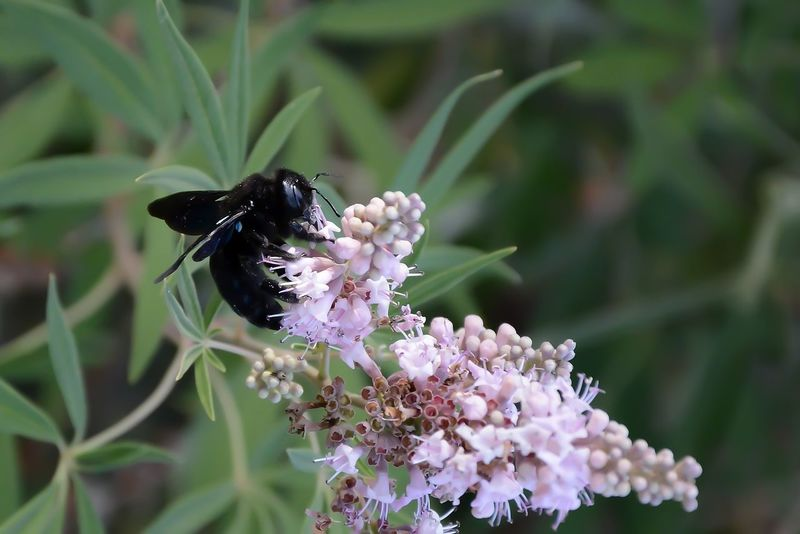 Animal Themes Animal Wildlife Animals In The Wild Beauty In Nature Black Bee Close-up Day Flower Flower Head Fragility Freshness Insect Leaf Nature No People One Animal Outdoors