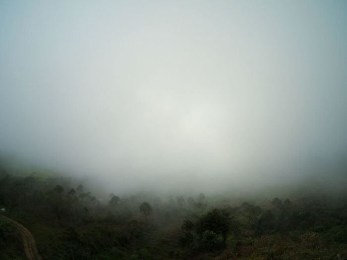 Scenic view of landscape in foggy weather