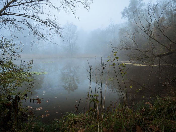 Foggy water Fog Water No People Lake Condensation Nature Destruction Outdoors Power In Nature Day Flood Tree Beauty In Nature Nature Landscape Blue Autumn Forest Scenics Low Angle View Multi Colored Accidents And Disasters