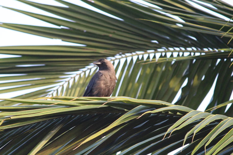 EyeEm Selects Bird One Animal Animal Wildlife Animals In The Wild Nature Animal Themes No People Palm Tree Tree Outdoors Day Close-up Beauty In Nature Perching Bird Photography Green Background Eyeem India