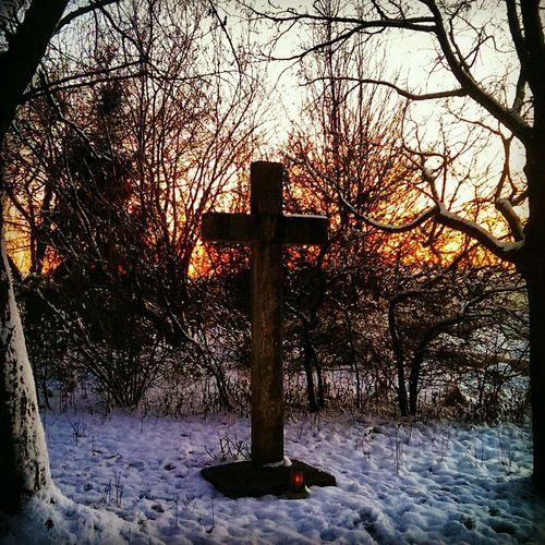 Walking Around Winter Cross Woods