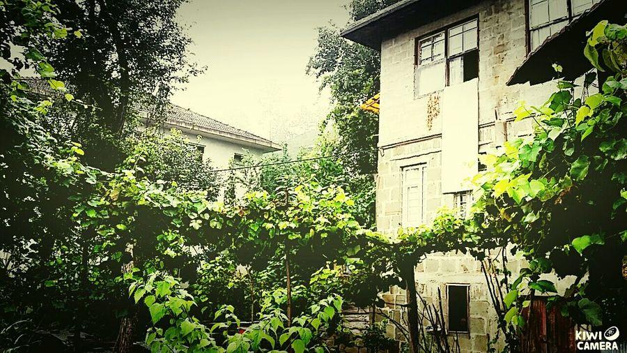 Stonehouse Taşev🏡 Doğa Yeşil Miss 😌 First Eyeem Photo Kirazdağı Rize