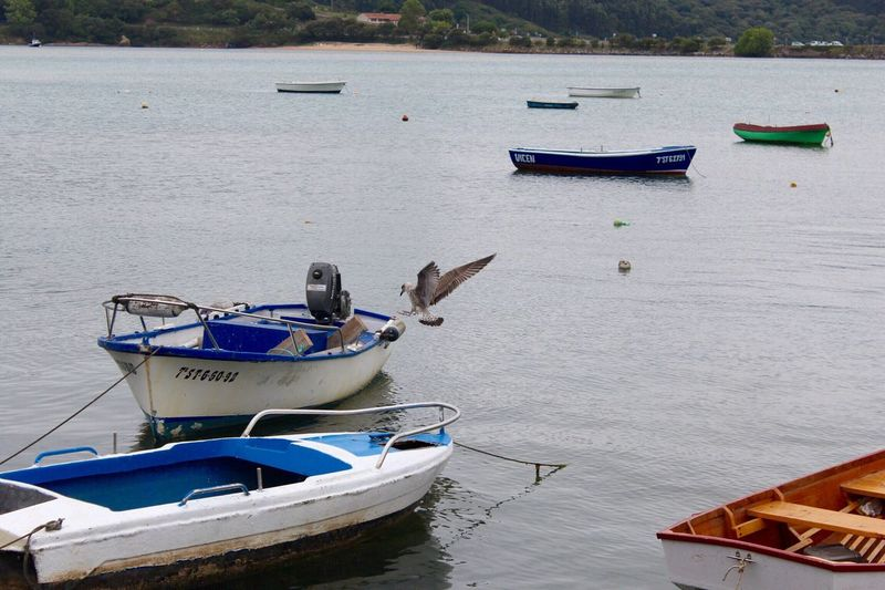 Nautical Vessel Moored Transportation Mode Of Transport Water Boat Sea Tranquility Day Outdoors No People Water Vehicle Nature Fishing Boat Beauty In Nature Gaviota Bird San Vicente De La Barquera Mar Flying