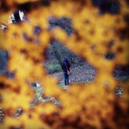Through The Eyes Of A Leaf