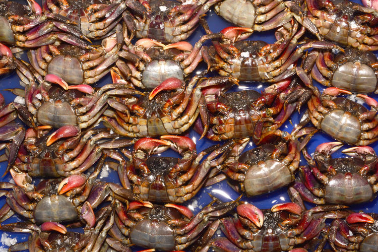 High angle view of crab in market