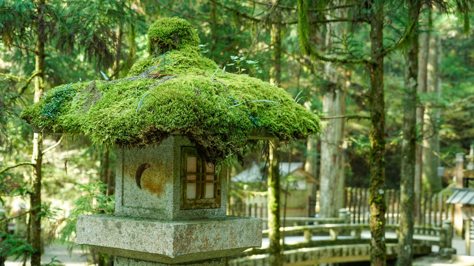 Stone Lantern Architecture Beauty In Nature Branch Buddhsit Built Structure Day Forest Green Color Growth Japan Lantern Lush Foliage Nature No People Outdoors Plant Pray Stone Lantern Temple Tranquil Scene Tranquility Tree Tree Trunk Water Zen