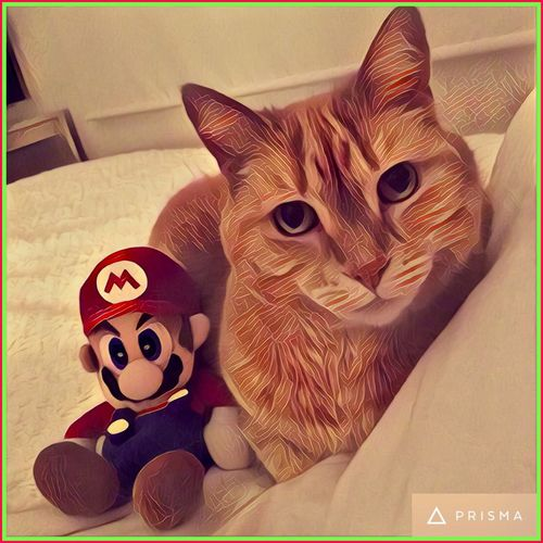 He see's deep within my soul.... 🐱 Cat Catart Prisma Prisma App Mycat Mario Supermario Toy Bedtime Nintendo Animals Feline Lovehimtobits My Sleeping Buddy Thoseeyes 💙🐱💚