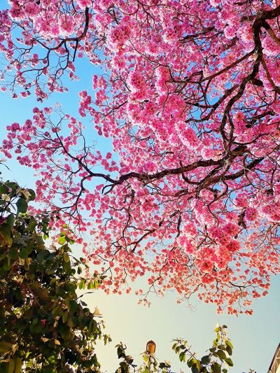 Nature Nature_collection Flower Head Pink Color Sun EyeEm Best Shots Photography Details Of Nature Tree Branch Backgrounds Botany Cherry Blossom Pollen