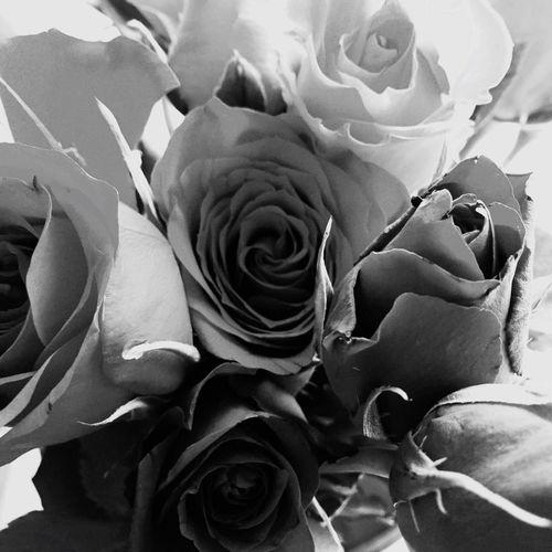 Un bouquet d'émotions.... Rose♥ Rose🌹 Bretagne Bretagne My Love Destination Bretagne Finistere
