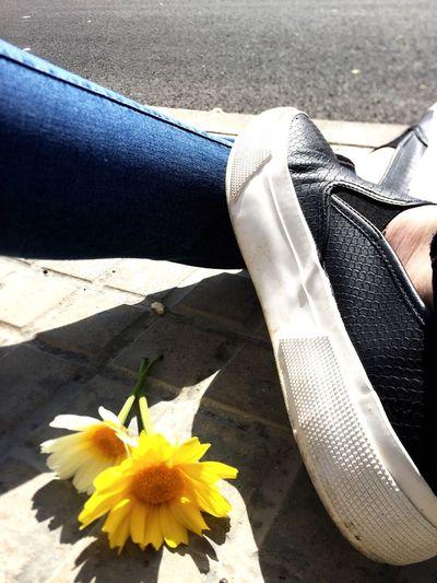 Spring Flowers Shine