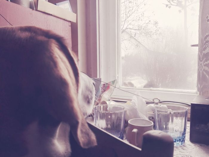 Dog Snow ❄ Winter Window Loking Somewhere
