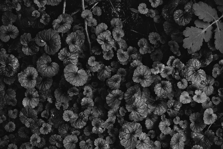 Full Frame Backgrounds Abundance Pattern No People Textured  Nature Outdoors Day Close-up Leaves Roots Forest Directly Above Succulent Plant Plants WoodLand Forest Ground Black And White Freshness