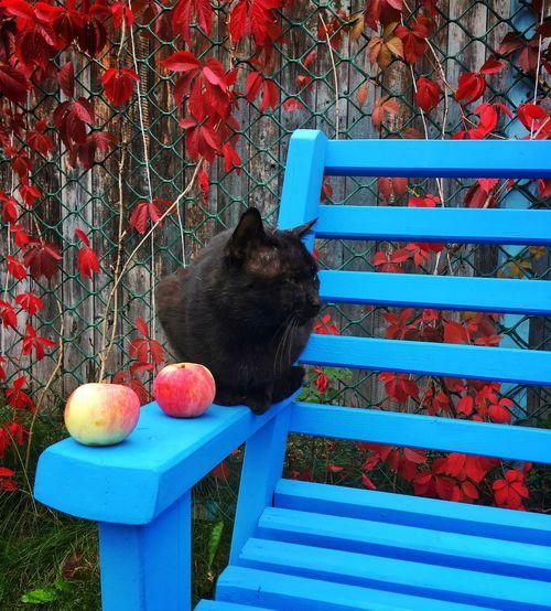 Black cat and
