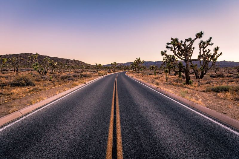Joshua Tree - Sunset Photo Series: On The Road While the coveted golden hour is a great time for sunset viewing, the blue hour that follows is worth waiting for. The quality of light, tones, shadows, & highlights are different, but just as captivating. This shot was taken just as the blue hour had commenced. Road The Way Forward Tree Nature Scenics Outdoors Sunset Landscape Tranquil Scene Beauty In Nature Photography Joshuatreenationalpark Sunset_collection Sunsets Mountain Beauty In Nature Desert Joshua Tree National Park Landscape_Collection Desert Landscape Beautiful Nature Colors Beautiful Nature Let's Go. Together.