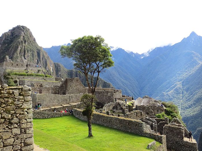 Travel Destinations History Architecture Mountain Built Structure Old Ruin Ancient Building Exterior Castle Mountain Range Tourism Tree Travel Ancient Civilization Day Scenics No People Outdoors Nature Beauty In Nature Peru Grass Machu Picchu Inca Inca Ruins