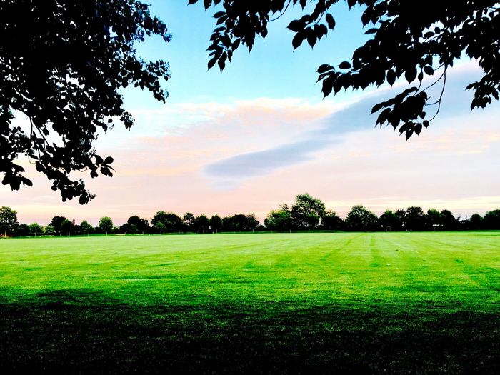 Tree Grass Green Color Field Tranquil Scene Beauty In Nature Nature Tranquility Growth Landscape Sky Scenics No People Outdoors Day Playing Field Freshness Sunset Love Running Goole Sommergefühle Let's Go. Together. Lets Go. Together. The Week On EyeEm Lost In The Landscape Perspectives On Nature
