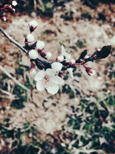 Bahar Cemre Tomurcuk IPhone