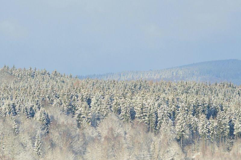 Schneelandschaft Snow Festive Season Hello World Amazing View Winter White By CanvasPop