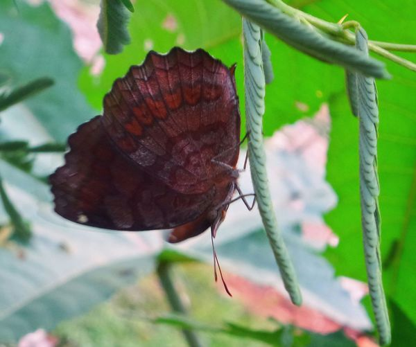 Close up of butterfly on leaf