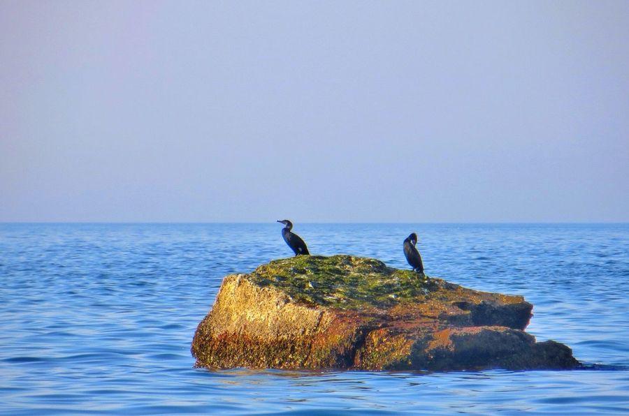 By the North Sea. The NorthSea Denmark Tadaa Community EyeEm