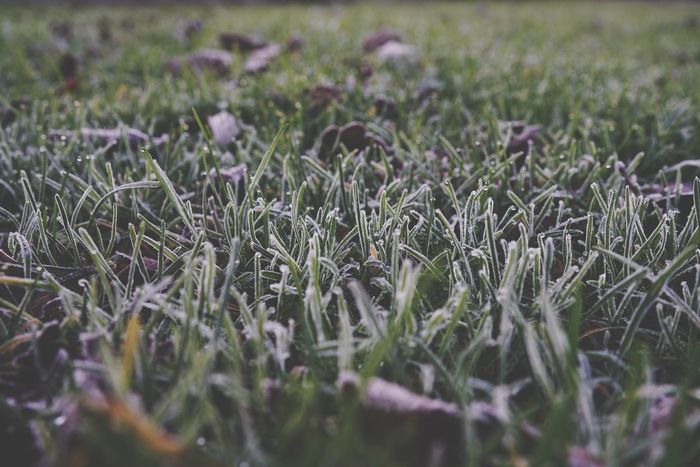 Frost Taking Photos Grass Gras  Frost Kungshamn FE35 Sony Alpha A7R II Nature Photography Sonyimages November 42mpix EyeEm Nature Lover Gravarne Swedish Nature Foto