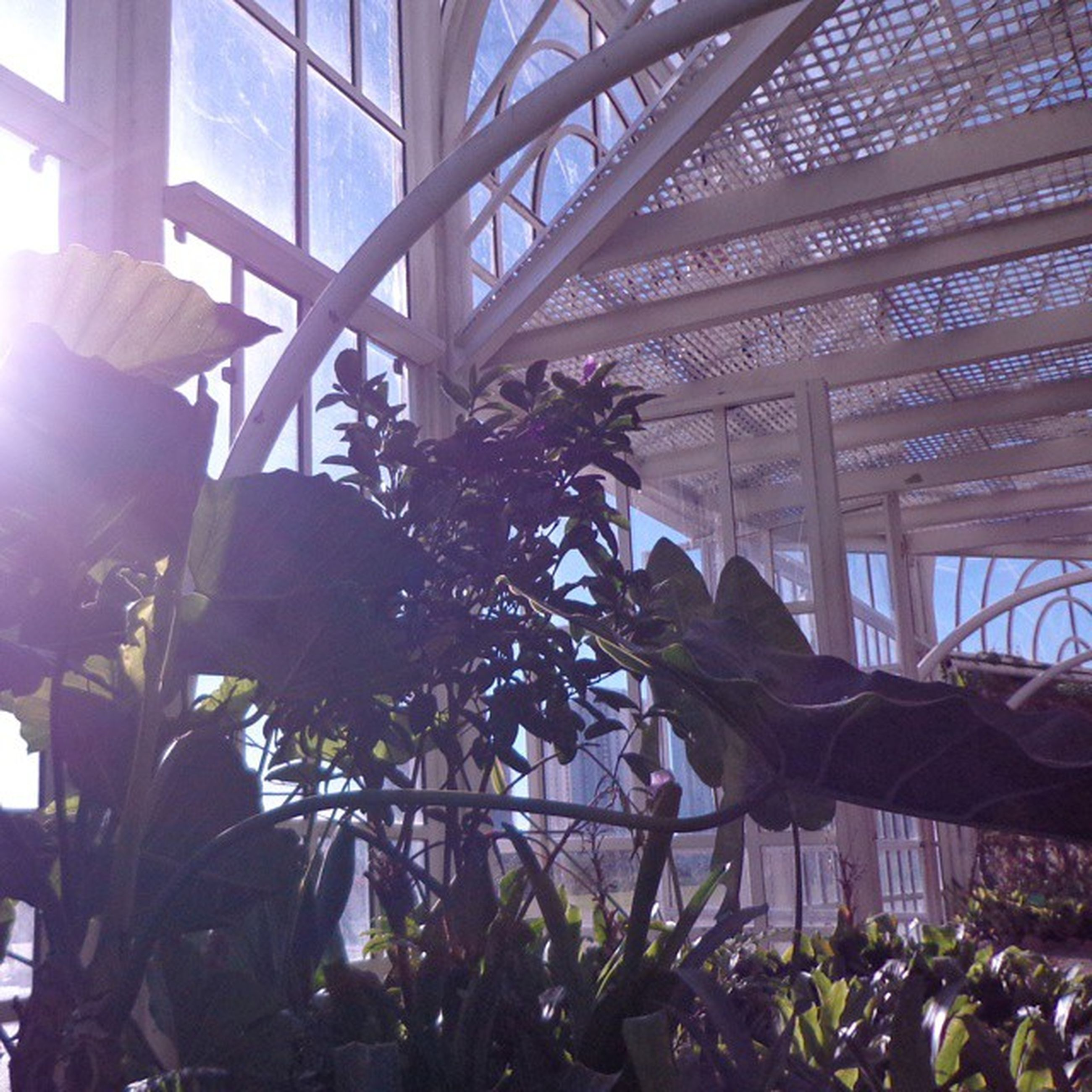 built structure, architecture, indoors, plant, low angle view, building exterior, sunlight, leaf, glass - material, ceiling, potted plant, day, growth, window, building, no people, modern, flower, greenhouse, balcony