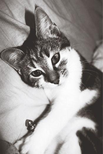My Babe <3 Cat Blackandwhite
