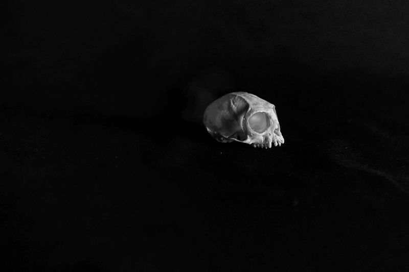 .04 Mammal Delicate Marmoset Isolated Teeth Still Life Natural History Textured Surface Black And White Photography Black And White Skull Kranium Animal Close-up Nature Black Background