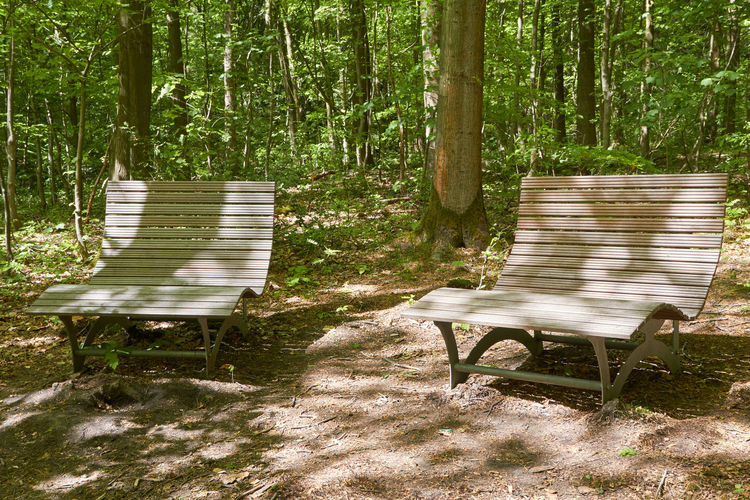 benches Absence Beauty In Nature Bench Benches Chair Day Empty Forest Land Nature No People Outdoor Chair Outdoors Park Bench Plant Seat Tranquil Scene Tranquility Tree Tree Trunk Trunk Wood - Material WoodLand