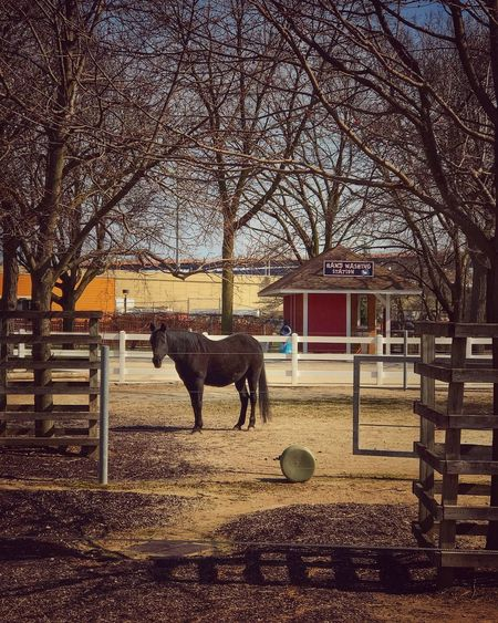 Lonely Horse Animal Bare Trees Branches Fence Framed By Trees Gate Horse No Peple Red Building Shadows Straw Yellow Building