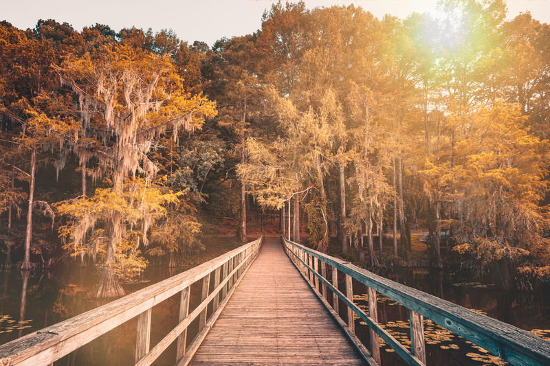 Autumn mood at the caddo lake, texas. wooden bridge leading to a magical forest