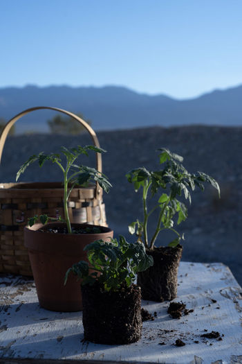 Potted plants against mountain