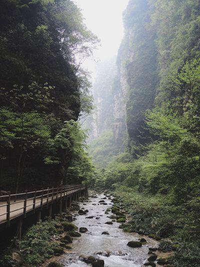 大峽谷 China Greenjourney