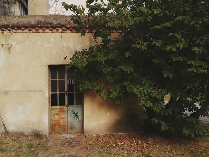 The old hideaway (El viejo escondite). - Taking Photos The Great Outdoors - 2016 EyeEm Awards Simple Photography Photography Photo Door Old EyeEm Best Shots EyeEmBestPics EyeEm Eye4photography  Plant Nature Gardening Vscocam LifeInColor Colors Montevideo Uruguay Photooftheday Urban Exploration Outdoors Exploring
