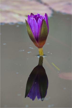 Flower Collection Flowerporn EyeEm Best Shots - Nature Reflection