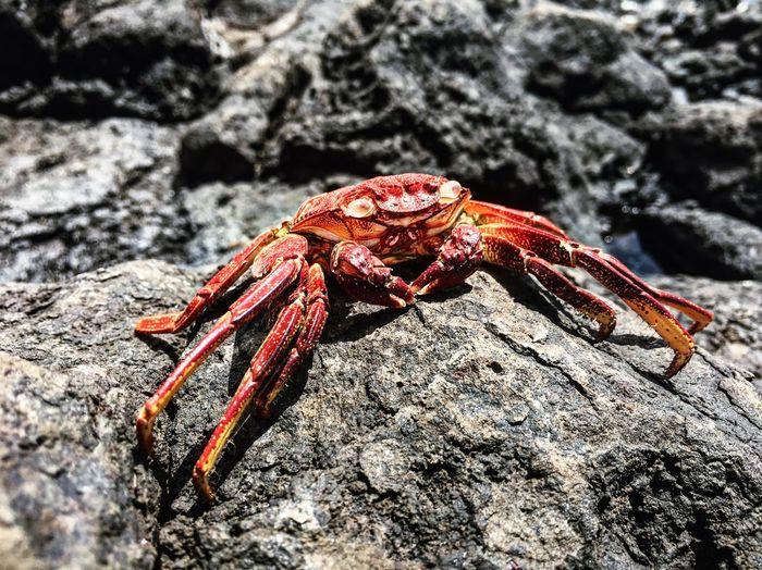 Animal Wildlife Day Nature Rock Ocean Life