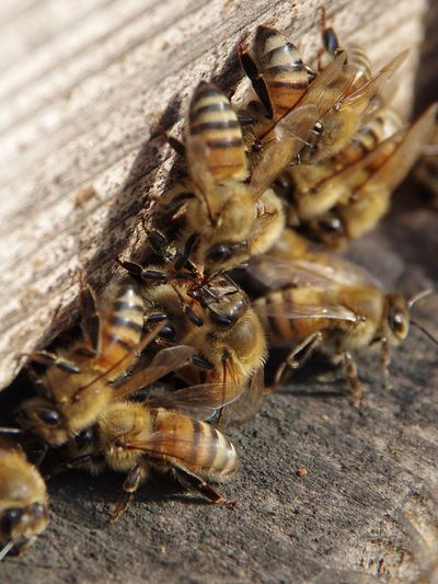 Honey hive farm in December Honey Bees  Honey Hive Insect Animal Themes Busy At Work Communication Society Sunlight Nature Beauty In Nature Outdoors Day Close-up