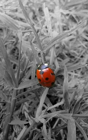 Little Bug On The Grass ..... Relaxing Taking Photos Enjoying Life Hanging Out .........
