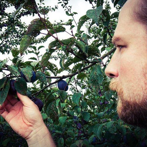 Ich pflück ne Pflaume: Selfie mit Kernobst Früchtchen Altesland Hamburg Obst Natur Selfie