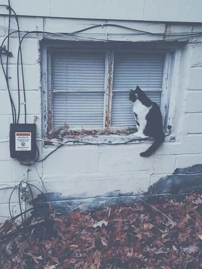Hipster Album Cover Cat Pensive Sad Lonely Window Vintage