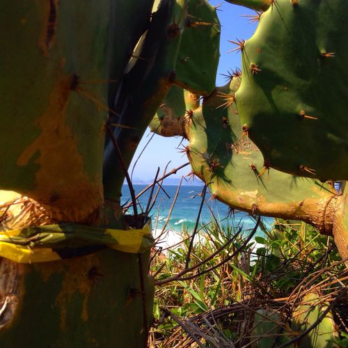 Beauty In Nature Brasil ♥ Cactus Nature No People Sky