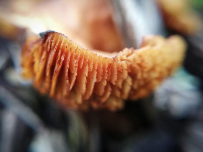 Close-up of mushroom growing outdoors