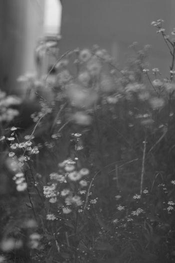 Black And White Snowflake Winter Defocused Tree Close-up Plant