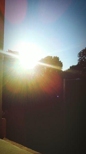 Enjoying The Sun Soaking Up The Sun Gettyimages First Eyeem Photo